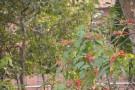 Live Plant Image
